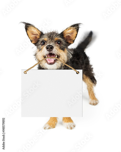 Leinwand Poster  Happy Dog Carrying Blank Sign