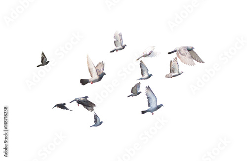 group of pigeon flying isolated for dicutClipping inside Tableau sur Toile