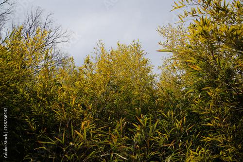 Foto op Aluminium Pistache Bamboo tree looking up from below