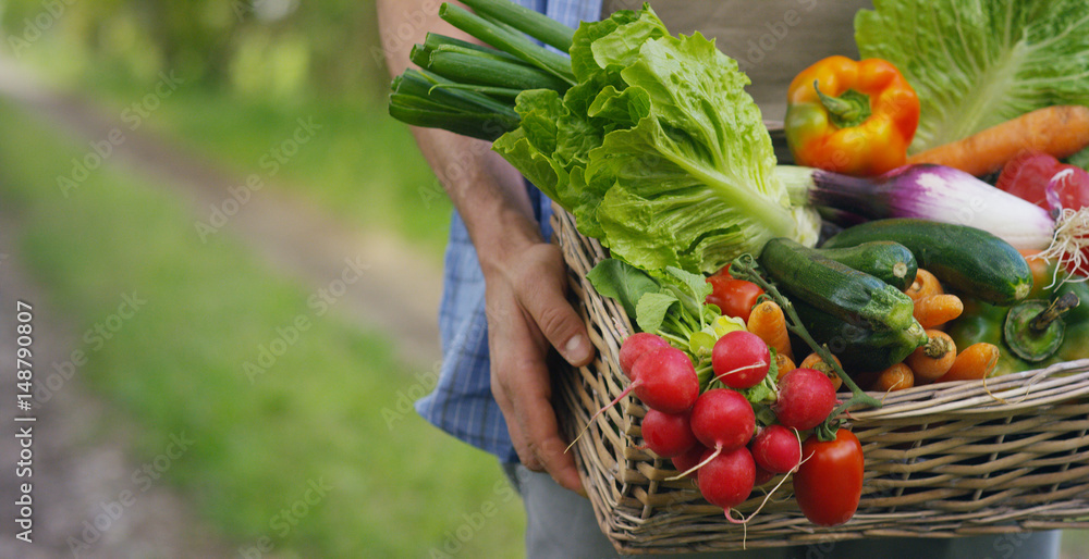 Fototapeta Portrait of a happy young farmer holding fresh vegetables in a basket. On a background of nature The concept of biological, bio products, bio ecology, grown by own hands, vegetarians, salads healthy