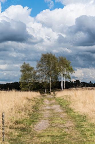 Fototapeten Natur Landgoed Heidestein Driebergen-Rijsenburg Utrecht Nederland