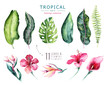 canvas print picture - Hand drawn watercolor tropical plants set . Exotic palm leaves, jungle tree, brazil tropic botany elements and flowers. Perfect for fabric design. Aloha set