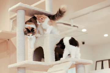 Three kittens playing in cat tower