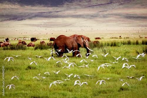 Słoń afrykański i ptaki w kraterze Ngorongoro w tle gór