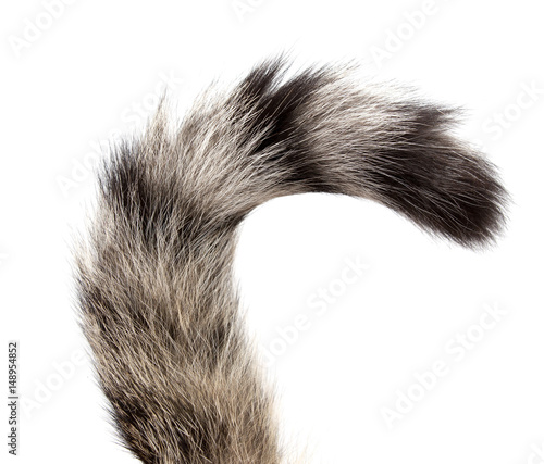 Striped cat tail on white background Canvas Print