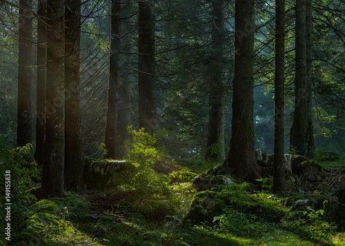 Foto auf Gartenposter Wald Luce nel bosco