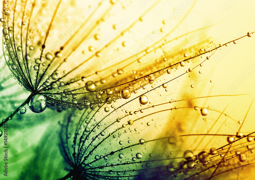 Fototapety, obrazy:  dandelion flower background
