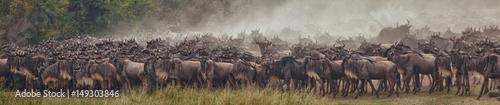 Canvas Prints Zebra A herd of wildebeest gathering at the Mara River waiting to cross, Masai Mara, Kenya