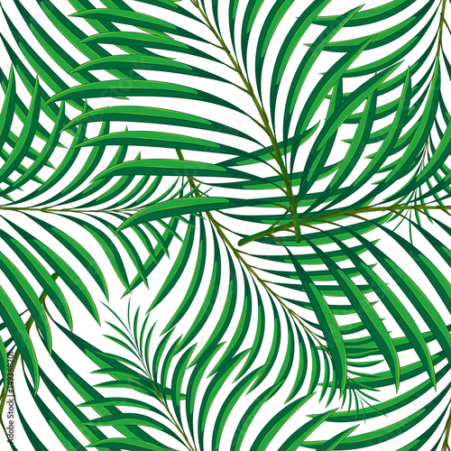 Ingelijste posters Tropische Bladeren Vector seamless pattern of tropical palm leaves isolated on white background. Vector illustration in hand drawn cartoon style. Can be used for printing on textile or gift wrap and wallpapers.