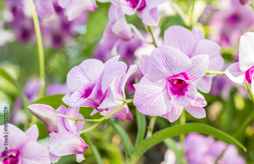 abstract-blurred-of-purple-orchids