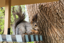 Squirrel And A Feeder At The C...