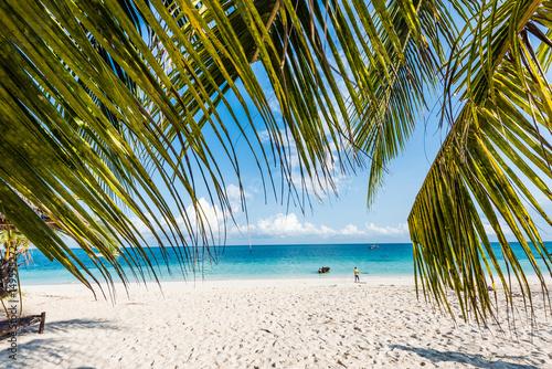 Printed kitchen splashbacks Zanzibar beautiful seascape with palm tree branches, beach and blue ocean