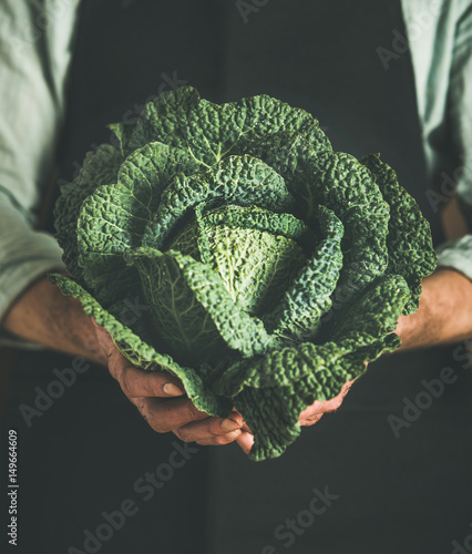 Man wearing black apron holding fresh green cabbagein in his hands at local farmers market. Gardening, farming and natural food concept
