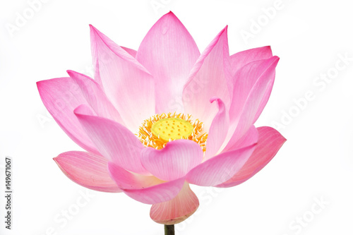 Photo Stands Lotus flower lotus flower isolated on white background.