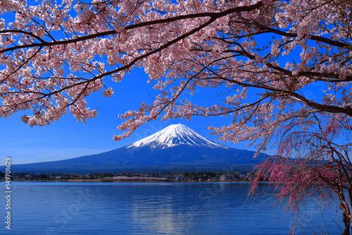 Photo sur Toile Fleur de cerisier Les fleurs de cerisiers fleurissent complètement et le mont. Fuji Lake Kawaguchi Japon