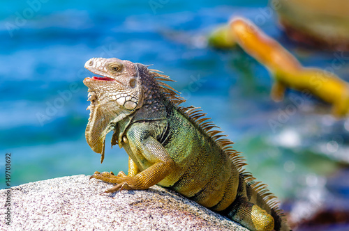 View on Iguana on a rock in National park Tayrona in Colombia Wallpaper Mural