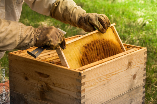 Photo beekeeper working with the hands in the beehive as a concept of apiculture with