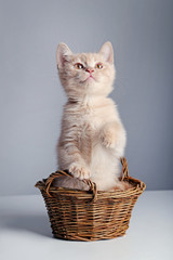 Fototapeta na wymiar Ginger kitten in basket on grey background