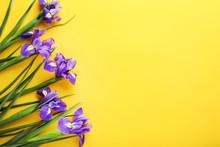 Purple Iris Flowers On Yellow Background