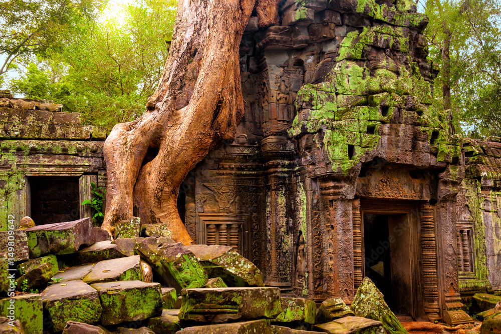 Fototapety, obrazy: Ta Prohm temple. Ancient Khmer architecture under the giant roots of a tree at Angkor Wat complex, Siem Reap, Cambodia.