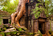 Ta Prohm Temple. Ancient Khmer...