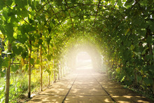 Tunnel In Beautiful Fruit Orchard.