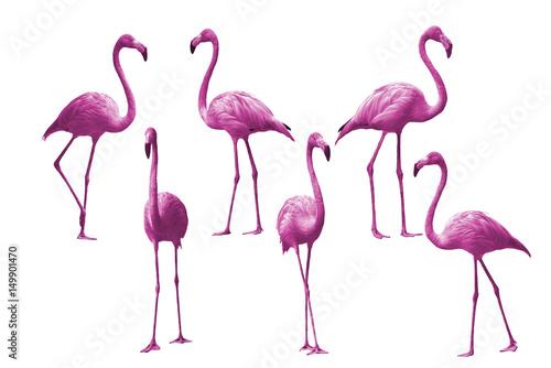 Foto auf Leinwand Flamingo Beautiful bird flamingo isolated on white background