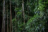 Fototapeta Bambus - Green Bamboo forest pattern
