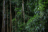 Fototapeta Bamboo - Green Bamboo forest pattern