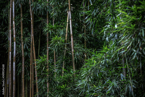 Cadres-photo bureau Bambou Green Bamboo forest pattern