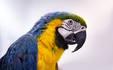 Parrot Macaw Against A White Background