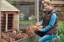 Pretty Woman Farmer Gathering Fresh Eggs Into Basket At Hen Farm In Countryside