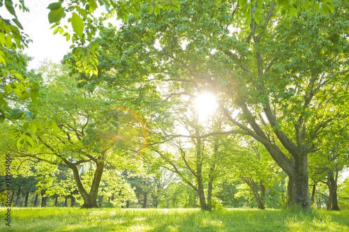 Tapety Drzewa   park-swiezy-zielony