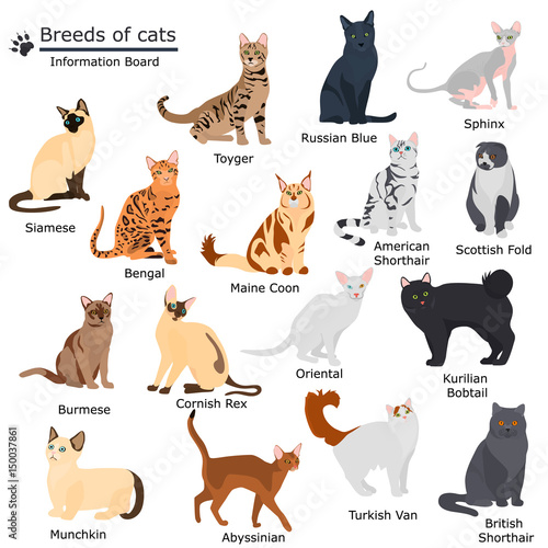 Fotografie, Obraz  Set of cats breeds color flat icons for web and mobile design