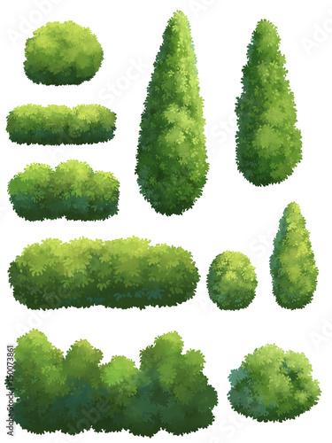 The shape of the tree in the garden. Fototapeta