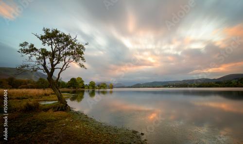 Fotografia Tree at Ullswater lake in the Lake District, UK