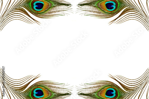 Deurstickers Pauw peacock feather texture in white background with text copy space