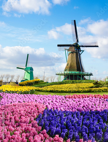 Photo Stands Candy pink Magic spring landscape with flowers and patterns aerial Mill in Netherlands, Europe (harmony, relaxation, anti-stress, meditation - concept).
