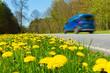 Auto schnell fahrend Strasse Löwenzahn Verkehr Familienausflug, Natur, Grüne Strasse, Landstrasse, Freizeit, Urlaub, verkehr, einsam, entspannt, Urlaubszeit
