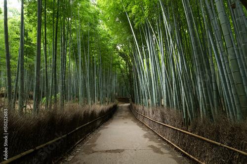 In de dag Zwart Arashiyama Bamboo Forest
