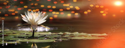 Deurstickers Lotusbloem Lotus flower on a lake with sunrise and reflections