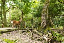 Lovely Deer In A Park
