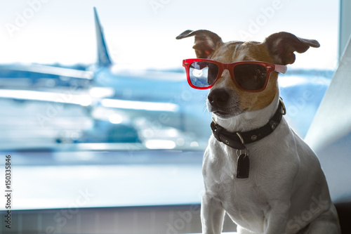 Acrylic Prints Crazy dog dog in airport terminal on vacation