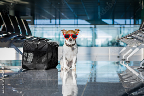 Aluminium Prints Crazy dog dog in airport terminal on vacation