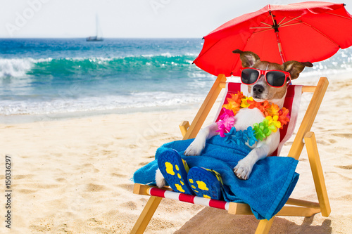 Fototapeta dog siesta on beach chair