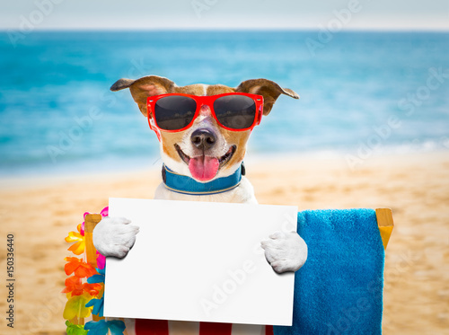 Canvas Prints Crazy dog dog siesta on beach chair