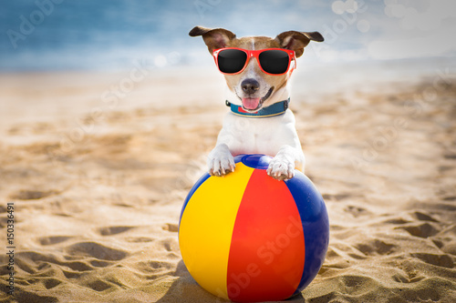 Keuken foto achterwand Crazy dog dog at the beach and ocean with plastic ball