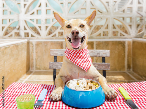 Aluminium Prints Crazy dog dog eating a the table with food bowl