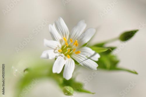Garden Poster Floral white flower