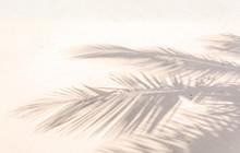 Ombre De Palmes Sur Plage De Sable Doré